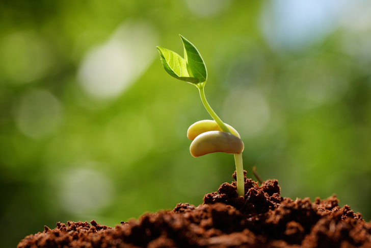 sprouting-seeds.jpg?1437361043026